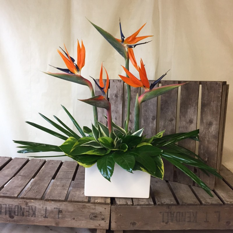 Birds of Paradise Arrangement