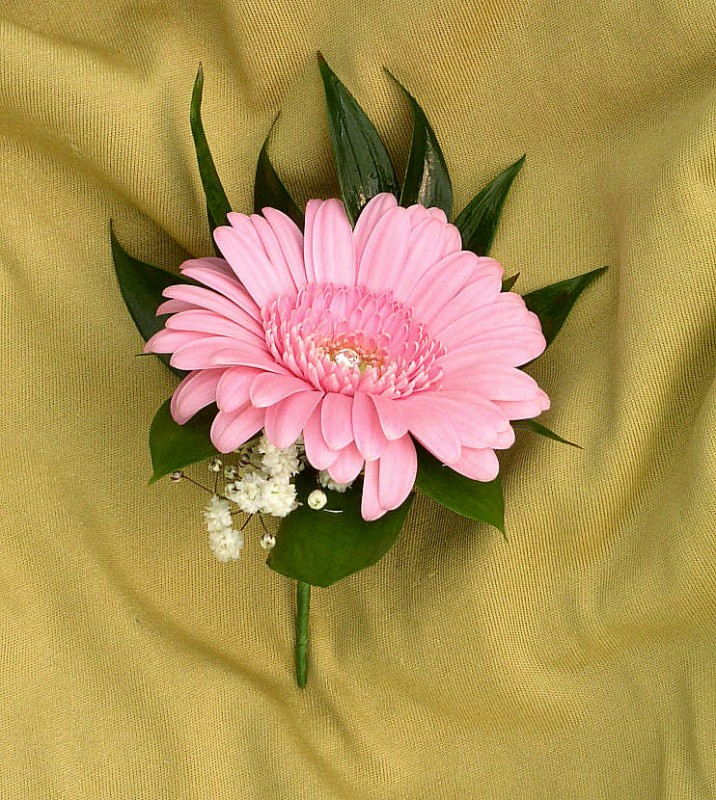 Ladies Germini Buttonhole with Gypsophilla